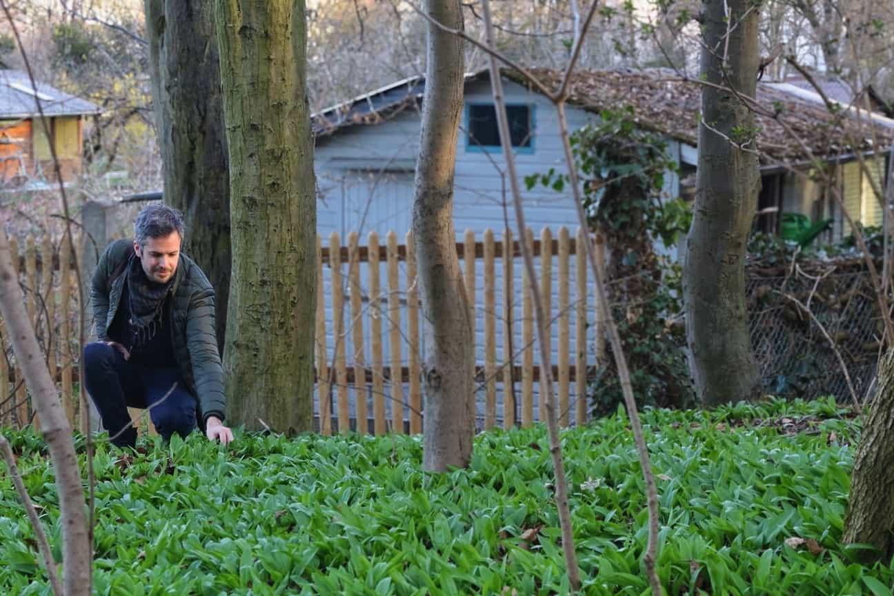 Jay picking wild garlic